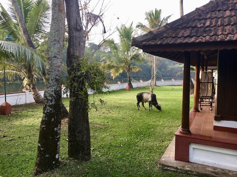 Coconut Lagoon reviews