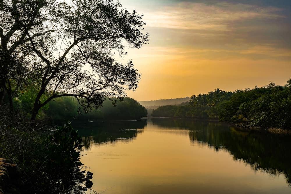 kayaking Goa backwaters