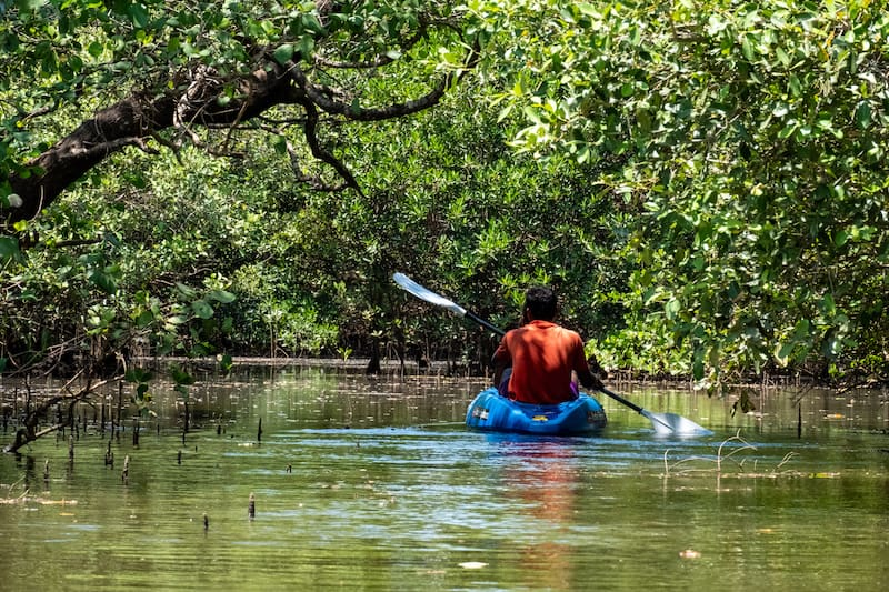 kayaking goa backwaters with Konkan Explorers