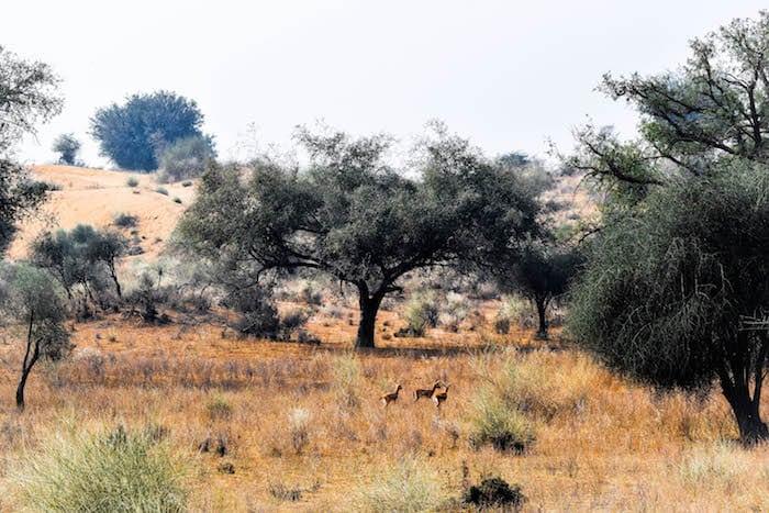 Rajasthan desert experience