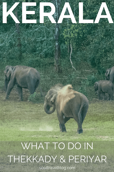 Thinking of travel in Kerala and visiting a national park? Looking to see elephants in kerala or perhaps even tigers? Check out our must know before you go guide to Periyar and Thekkady, Kerala. #kerala #india #travel #nationalparks #willdlifeinindia #indiansafari #periyar