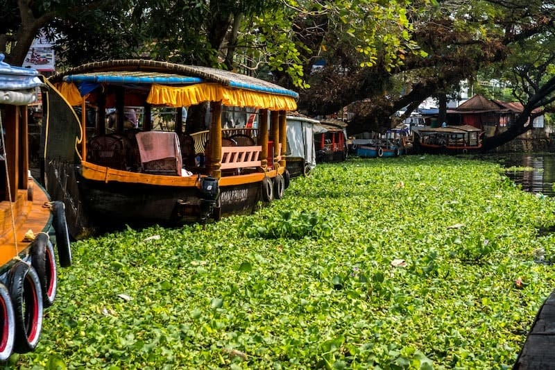 Responsible tourism in Alleppey